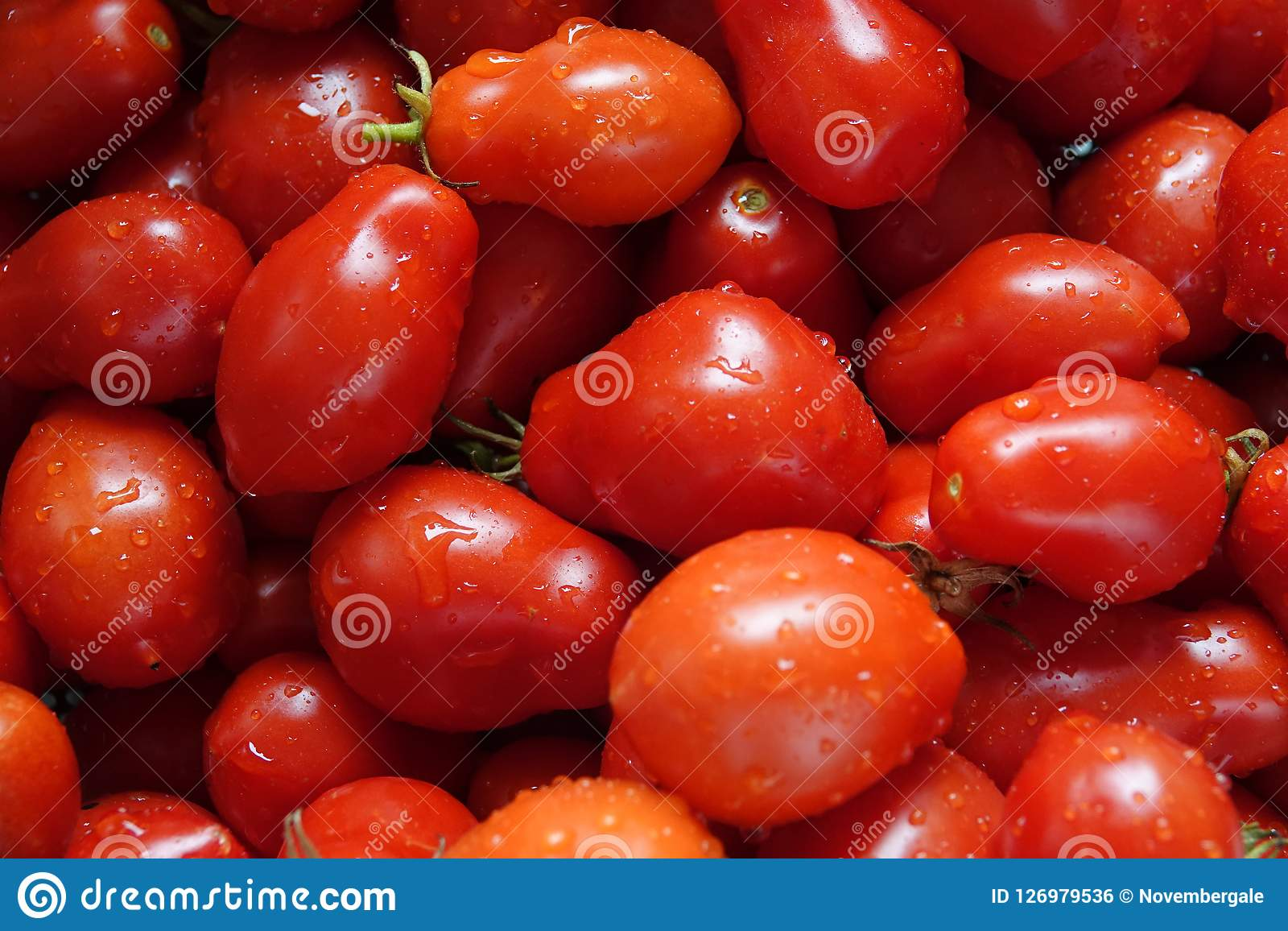 Nytt valda och tvättade Roma Tomatoes