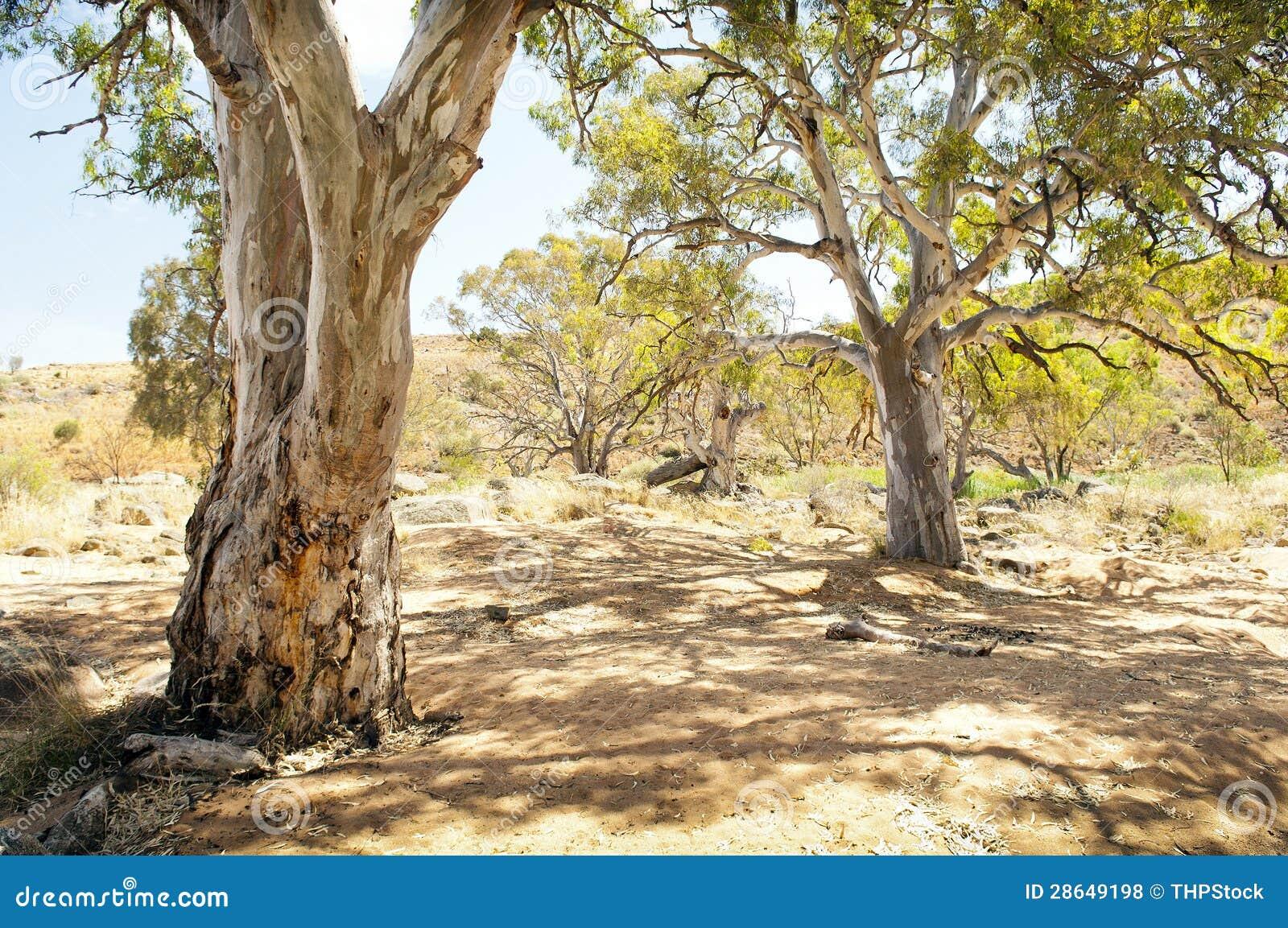 Oásis australianos do interior