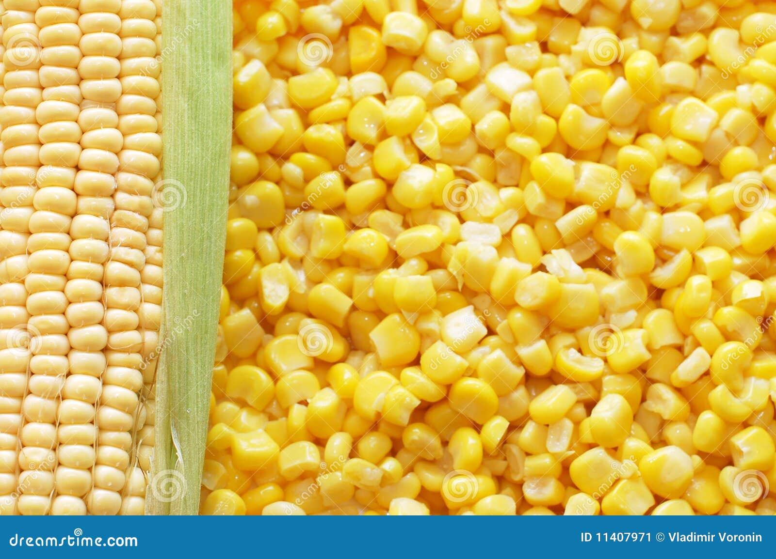 Oído del maíz fresco y del maíz estañado
