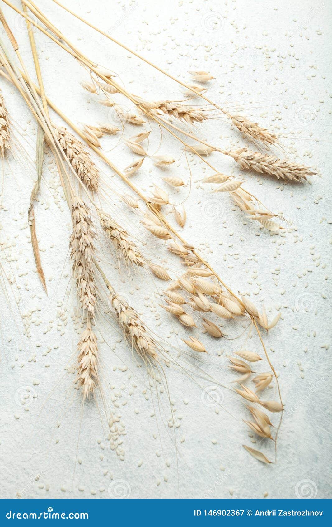 Oídos de oro del trigo y de la avena en una tabla blanca