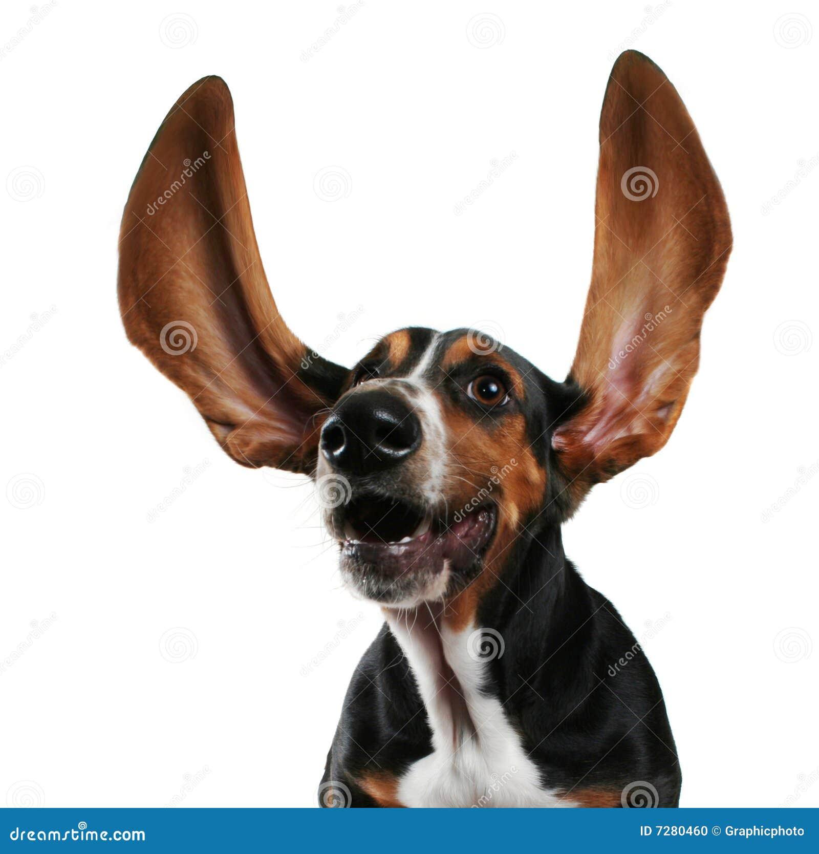 Oídos del aleteo