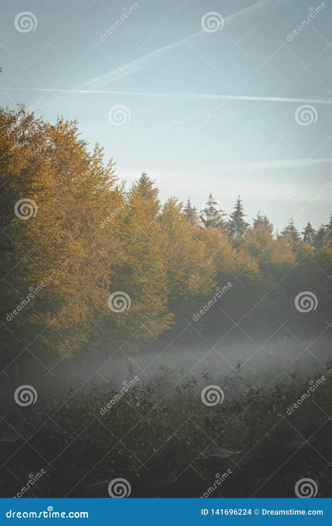 Опушка в солнечном свете раннего утра золотом с туманом свертывая в сквозных ветвях