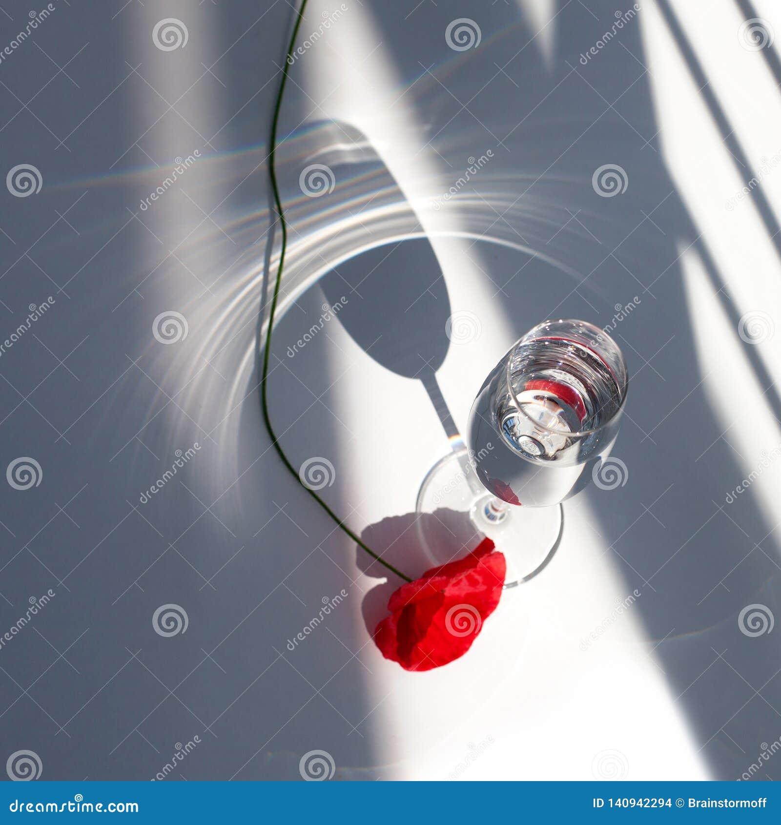 Один красный цветок мака на белой таблице со светом и тенями солнца контраста и бокале с концом взгляда сверху воды вверх