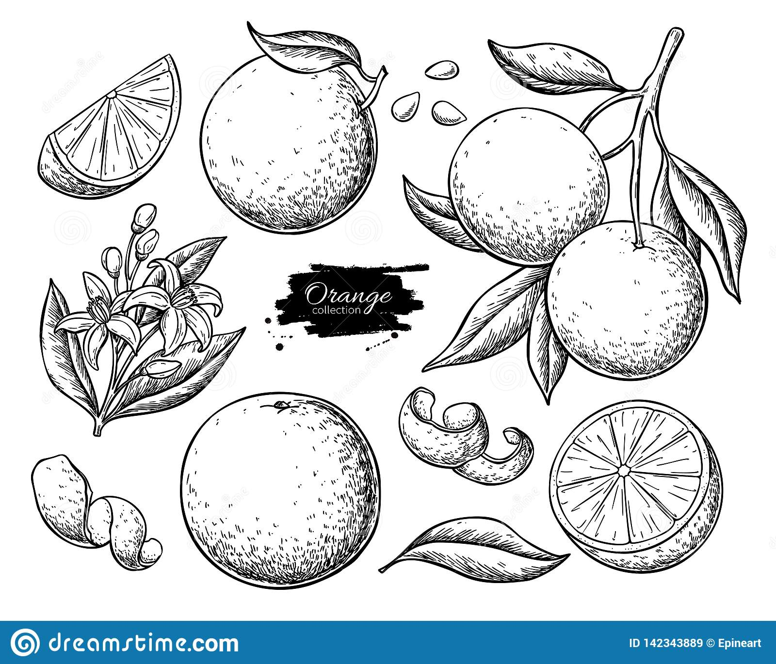 Оранжевый набор чертежа вектора плода Иллюстрация лета выгравированная едой