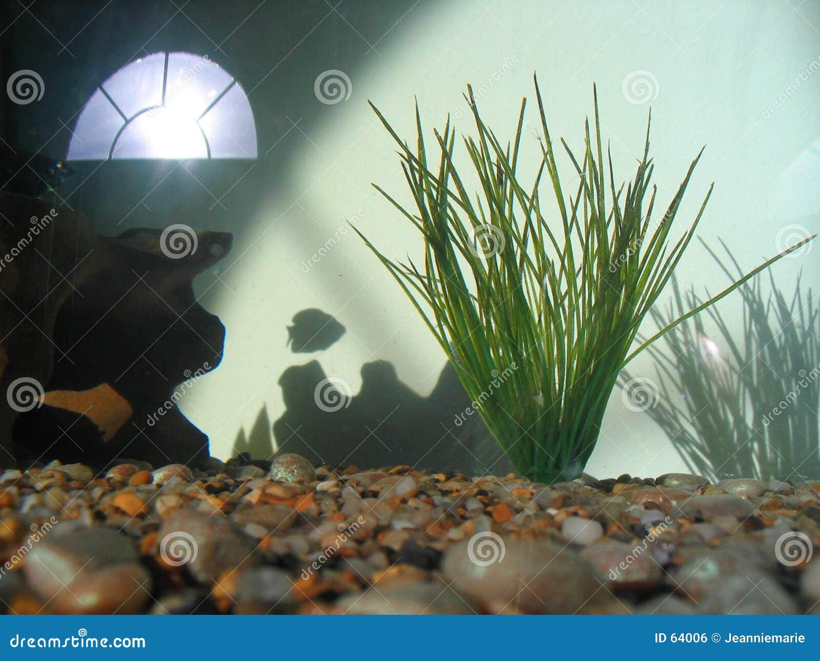 Download Où Tous Les Poissons Sont Allés ? Photo stock - Image du pets, ombres: 64006