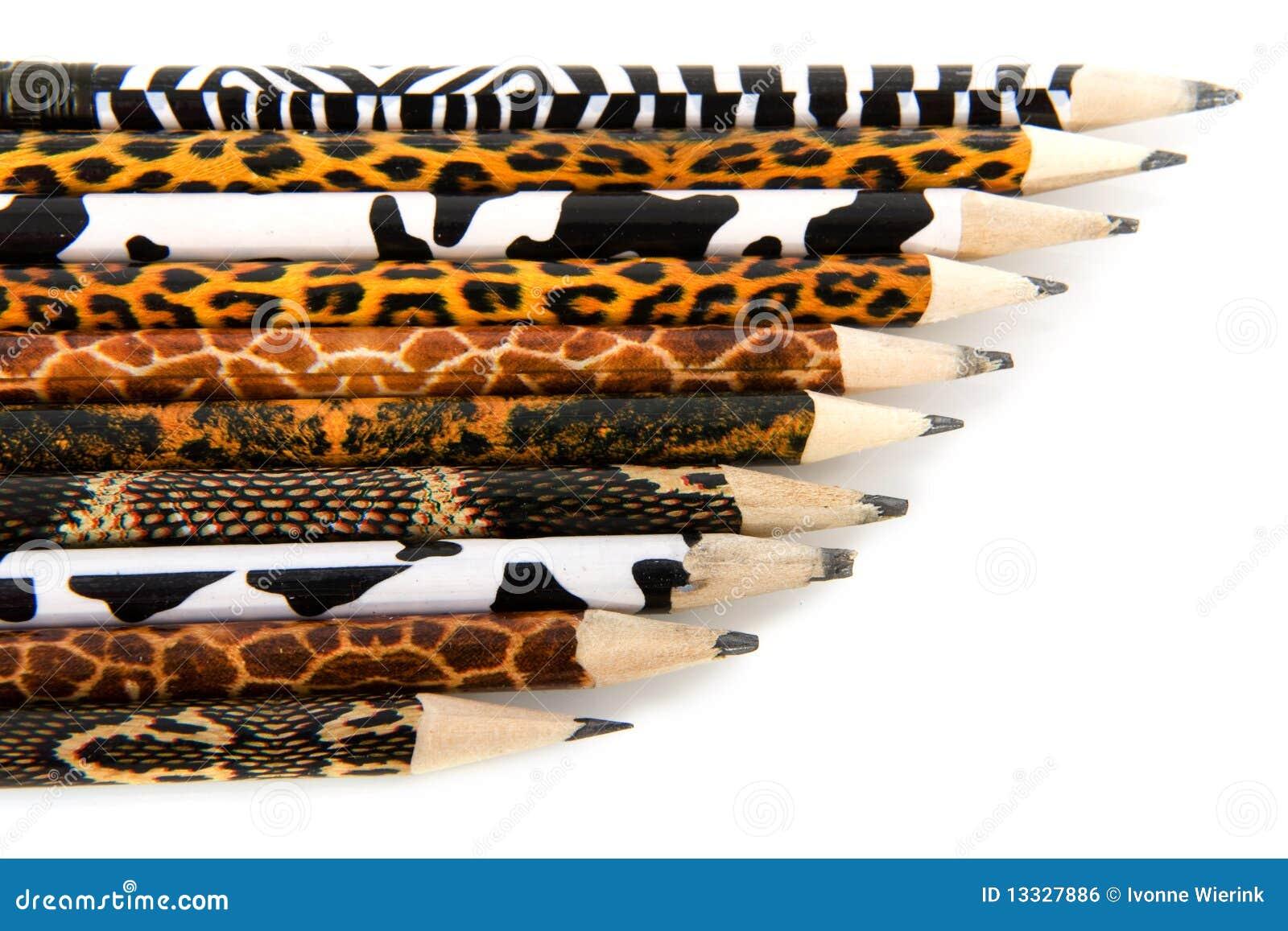 Ołówka safari