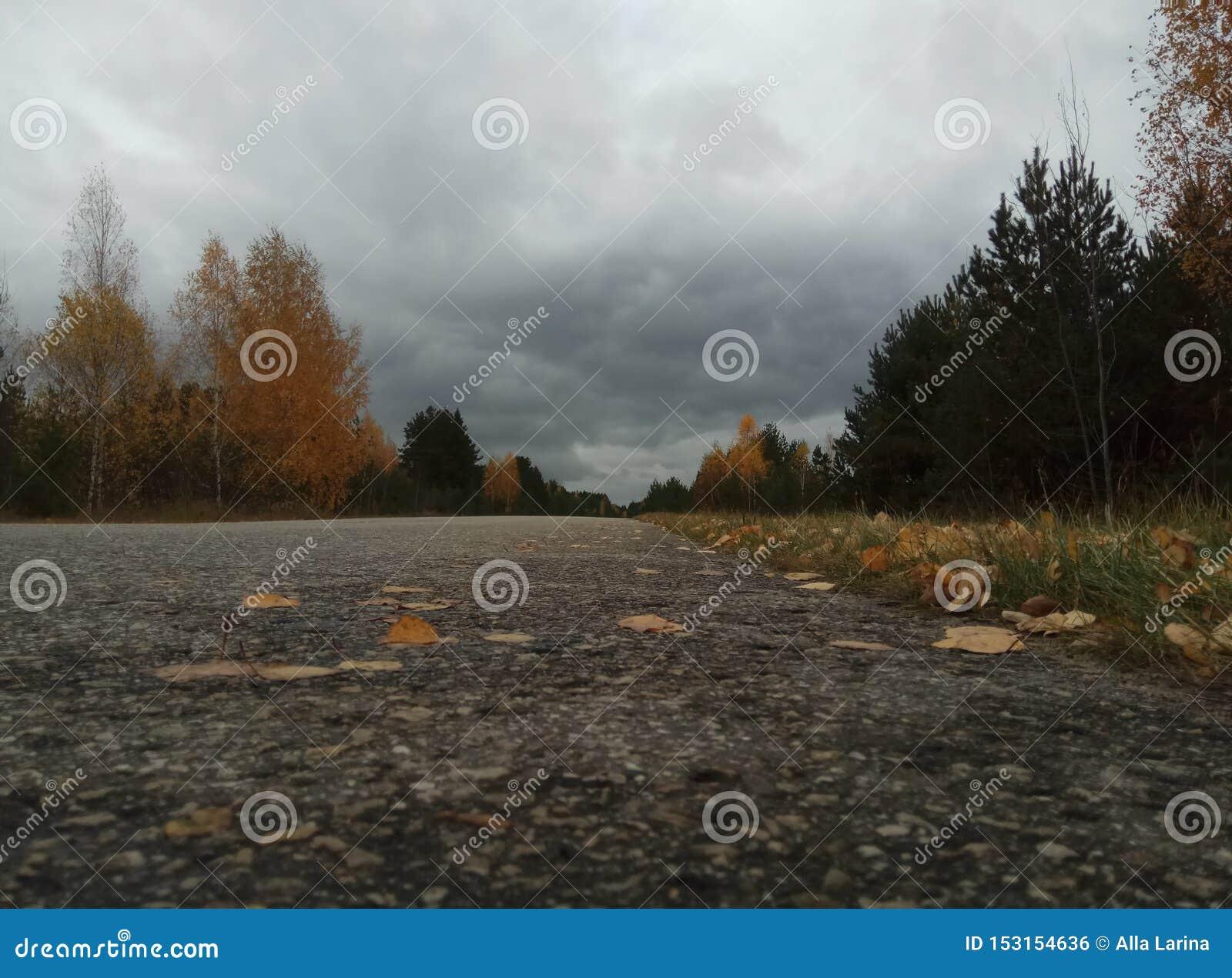 O δασικό τοπίο Μπλε ουρανός και δέντρα με το κίτρινο φύλλο και κανένα φύλλο Ορίζοντας φυσικό υπόβαθρο της Ρωσίας