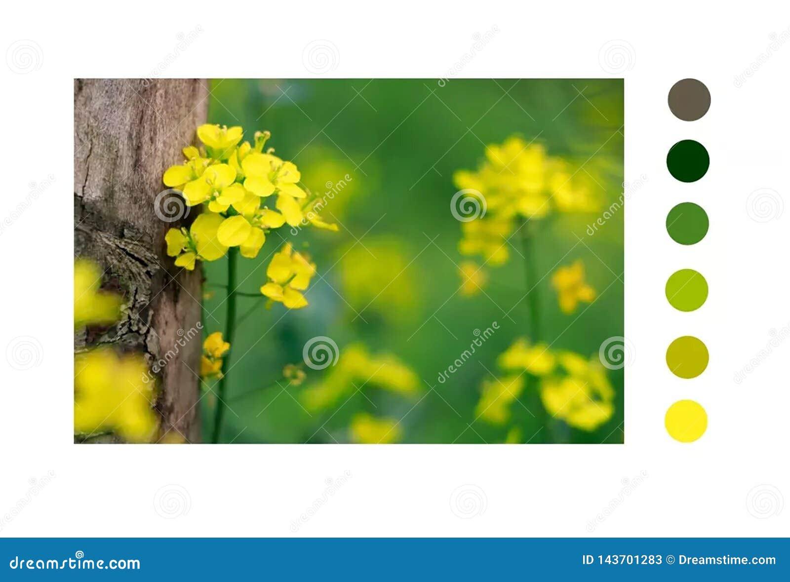 O amarelo consistiu com árvore
