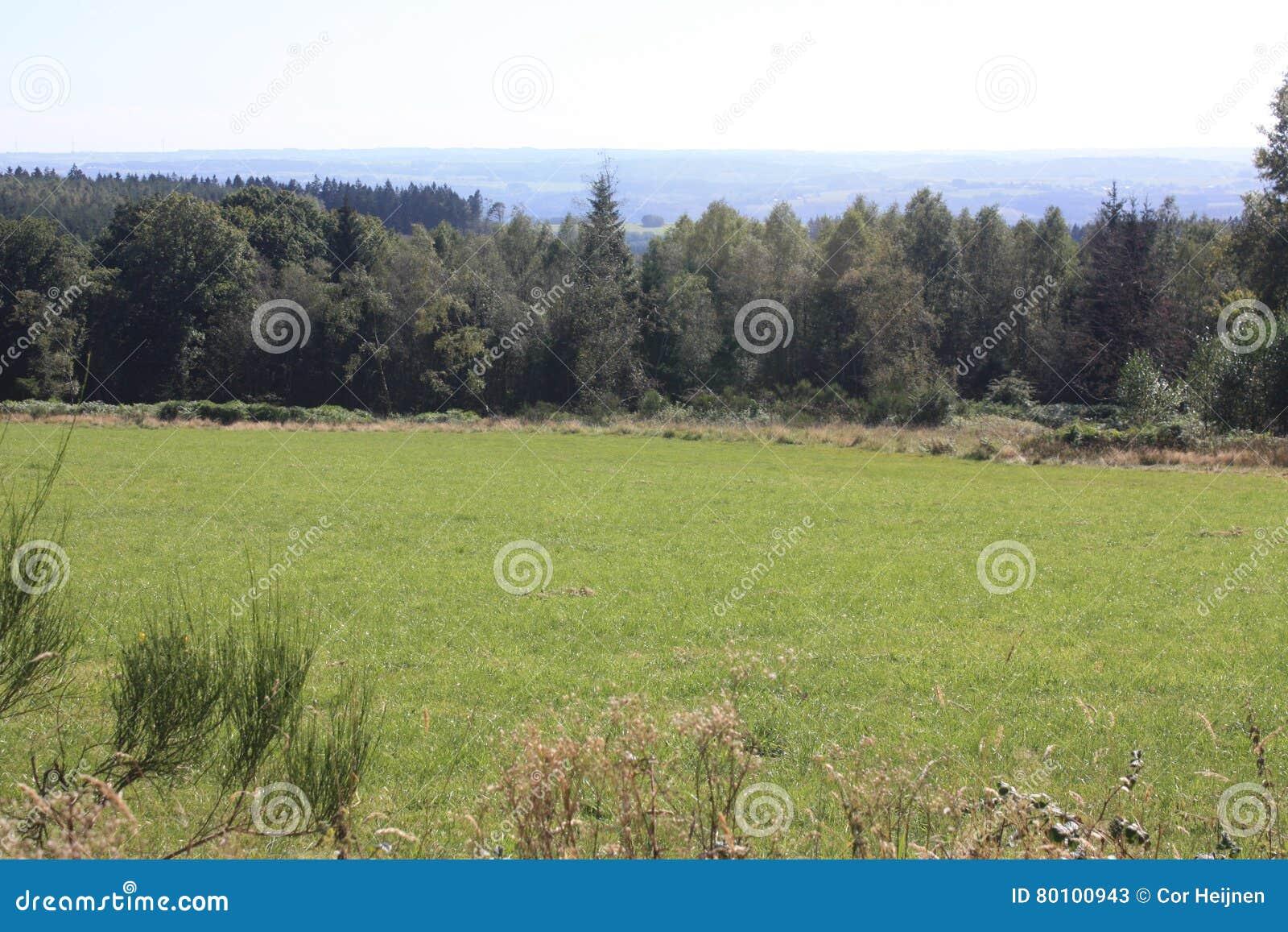 O Ardenne no lugar La Roche em Bélgica