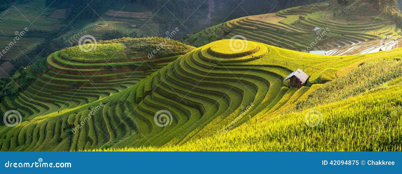 O arroz coloca em terraced de MU Cang Chai, YenBai, Vietname
