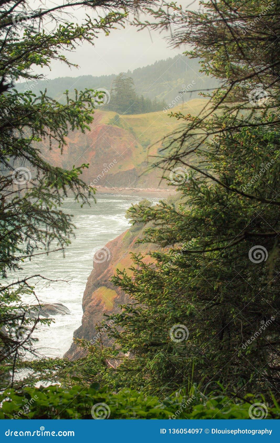 O auge a vaia a janela através das árvores do abeto vermelho para revelar o litoral de Oregon
