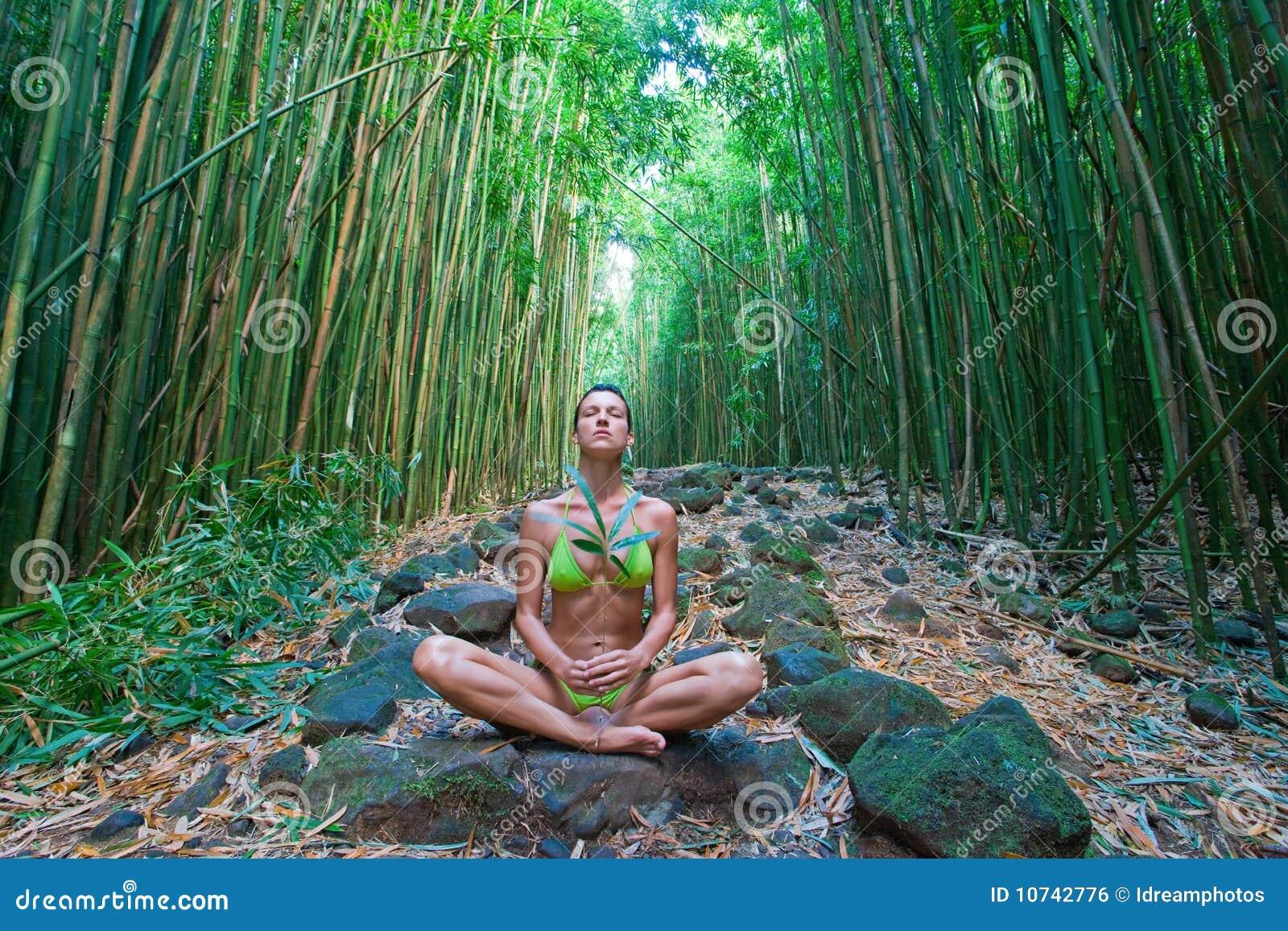 O bambu meditate
