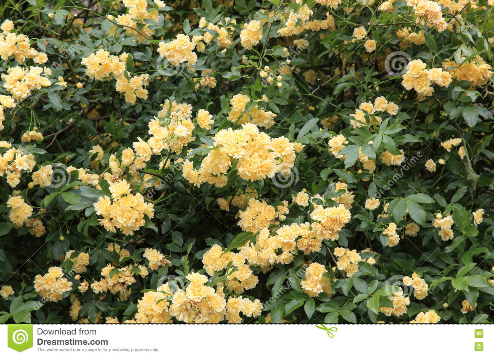 O Banksia aumentou