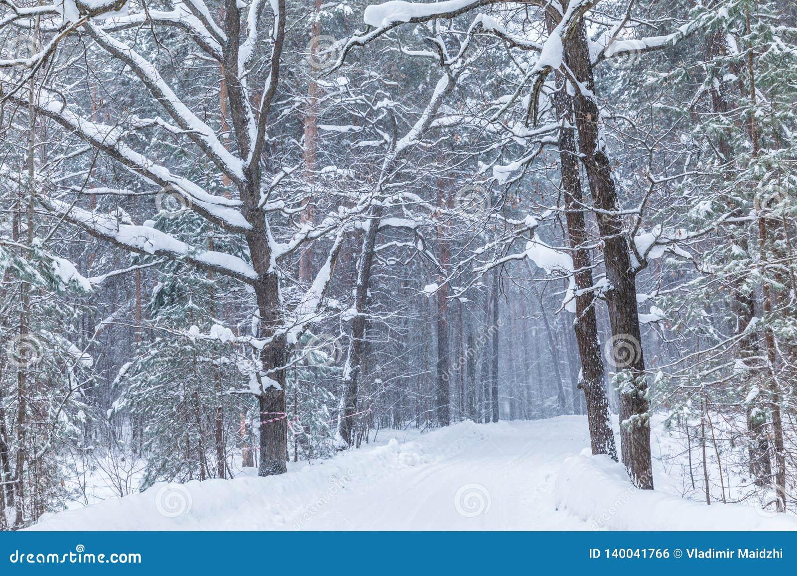 O blizzard na floresta ou no parque do inverno com a neve de queda