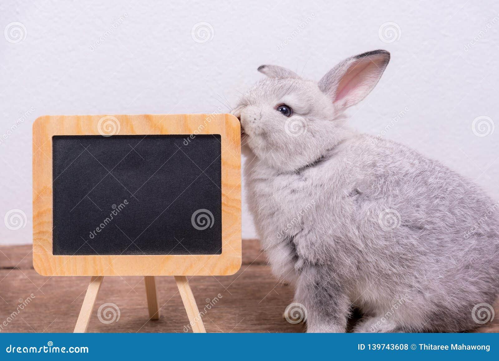O bonito do coelho e do quadro-negro