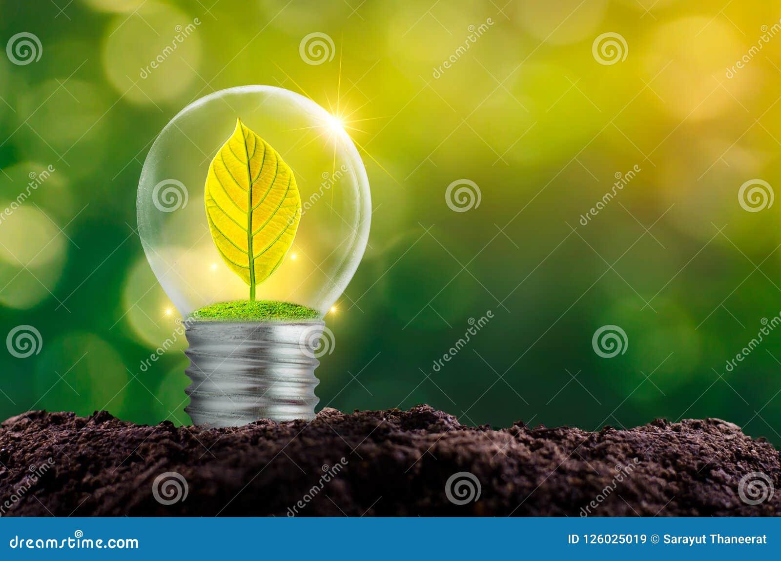 O bulbo é ficado situado no interior com floresta das folhas e as árvores estão na luz Conceitos da conservação e do gl ambientai
