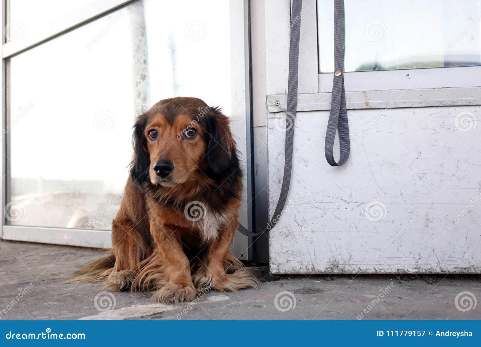 O cão é amarrado com um colar à construção na rua