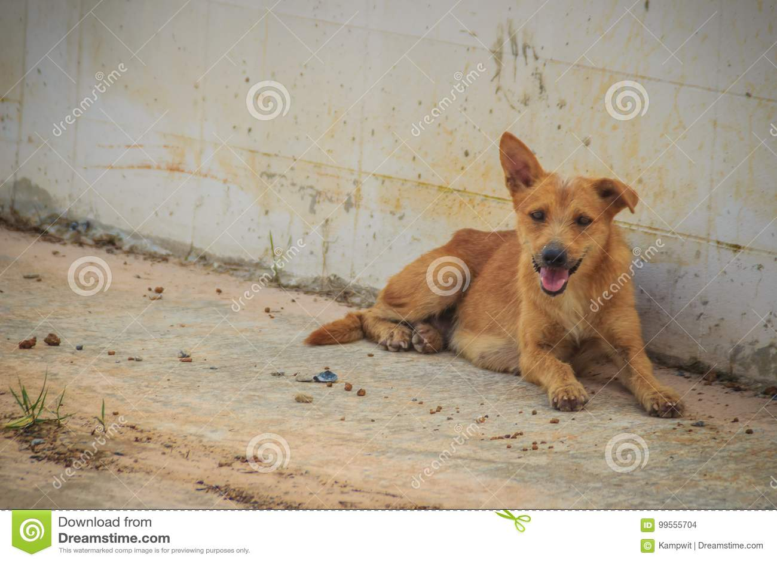 O cão disperso desabrigado abandonado vermelho está encontrando-se na rua pouco