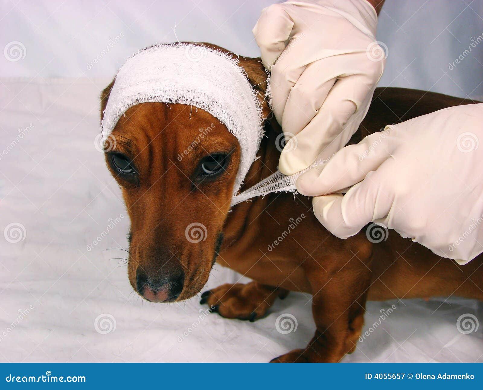O cão doente