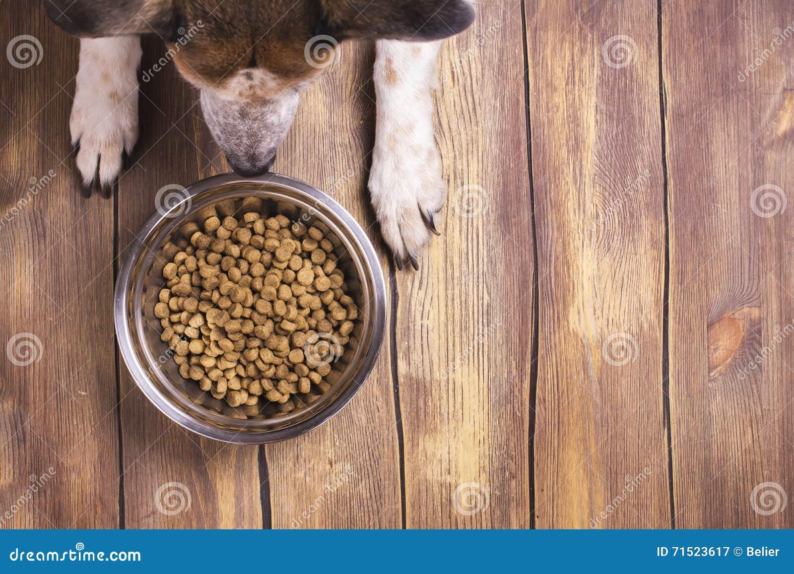 O cão e a bacia de seco kibble o alimento