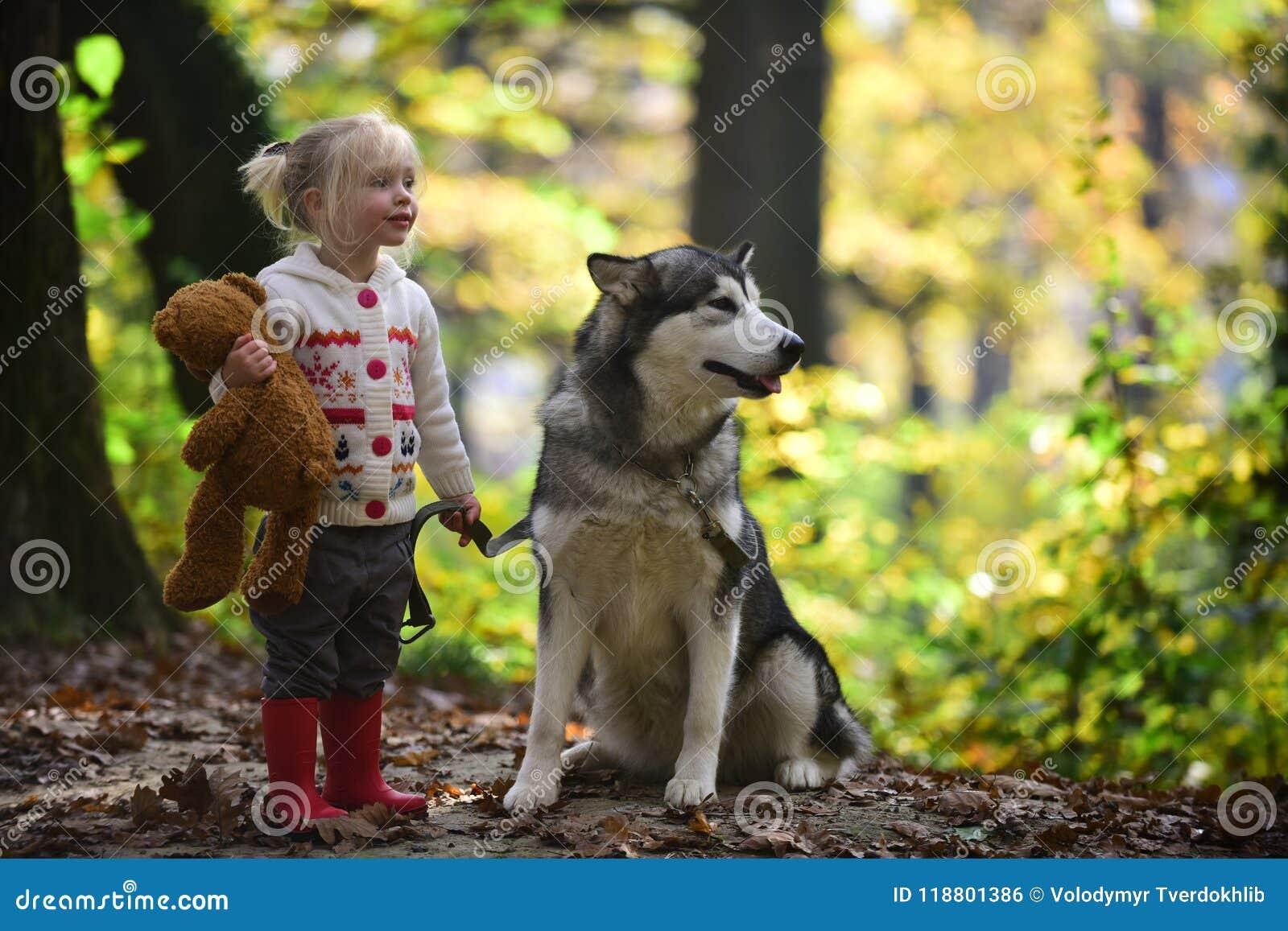 O cão e a menina na floresta do outono perseguem o cão de puxar trenós com a criança no ar fresco exterior