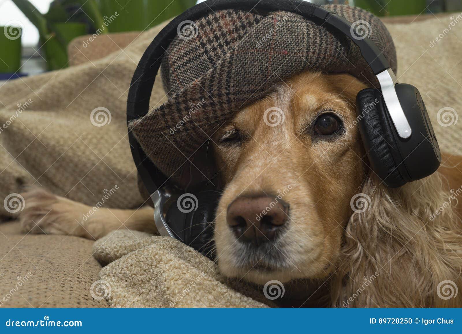 O cão escuta a música no telefone celular ao encontrar-se no sofá