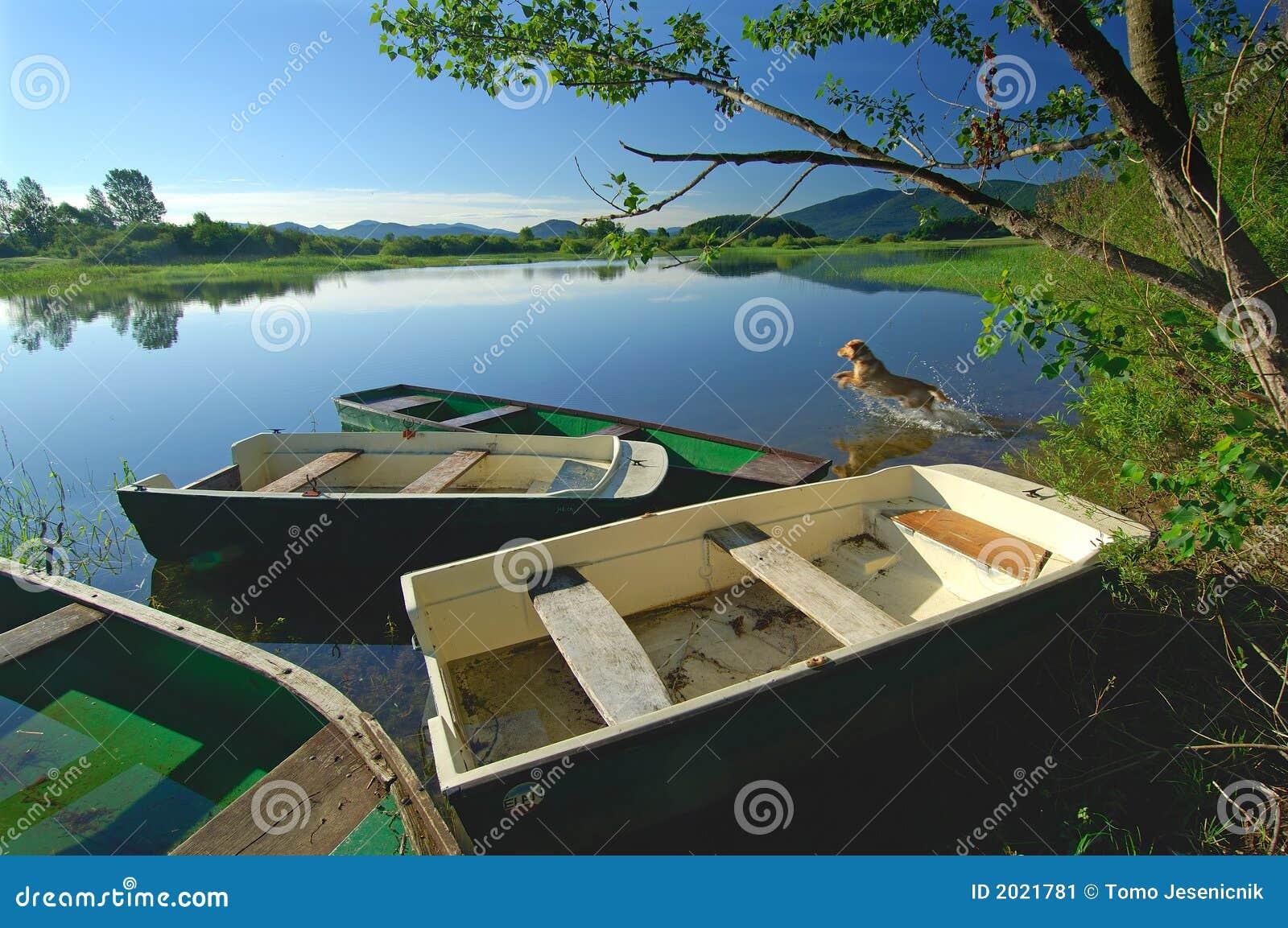 O cão está saltando no lago