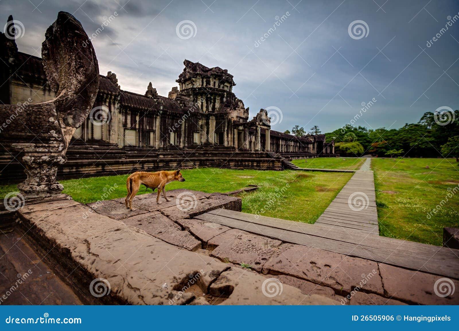 O cão magro está nas etapas de Angkor Wat