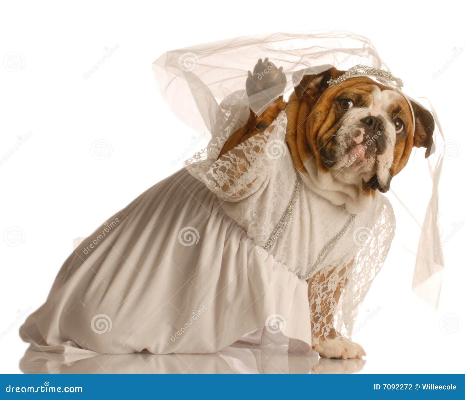 O cão vestiu-se acima como a noiva