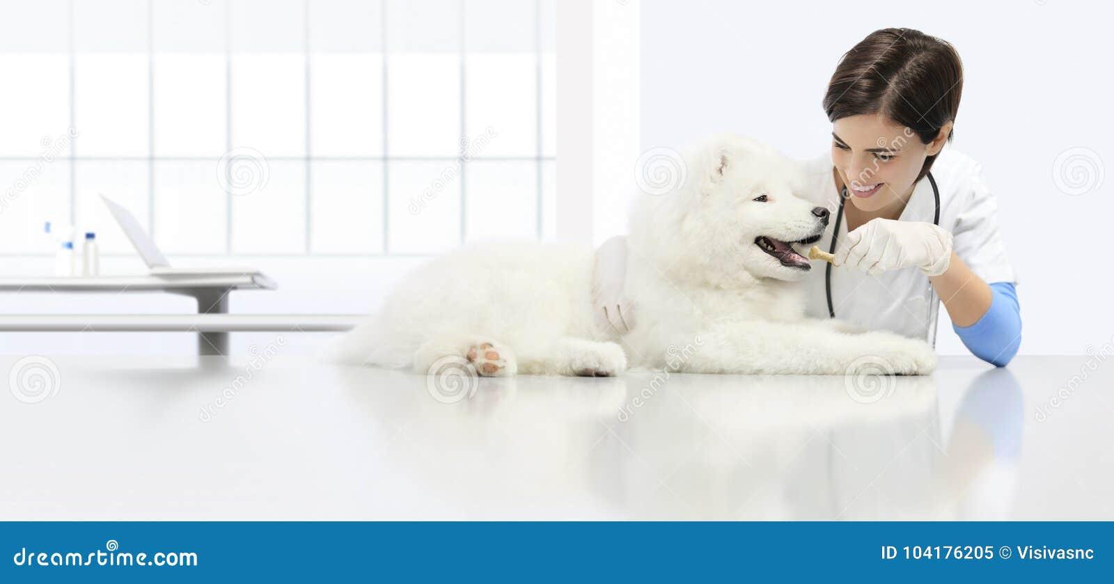 O cão veterinário do exame, veterinário de sorriso com kibble seco
