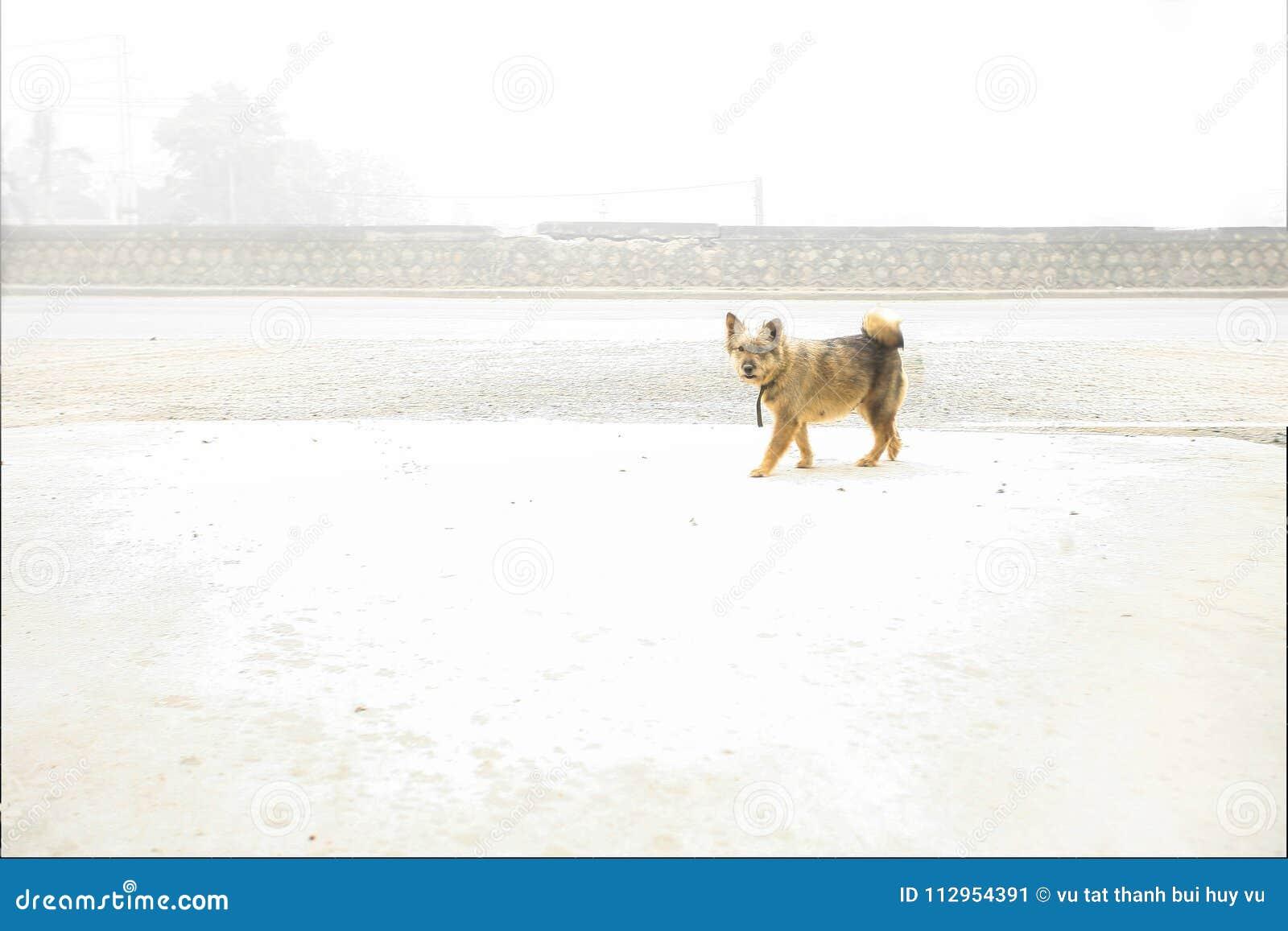 O cachorrinho é preghnant na neve branca