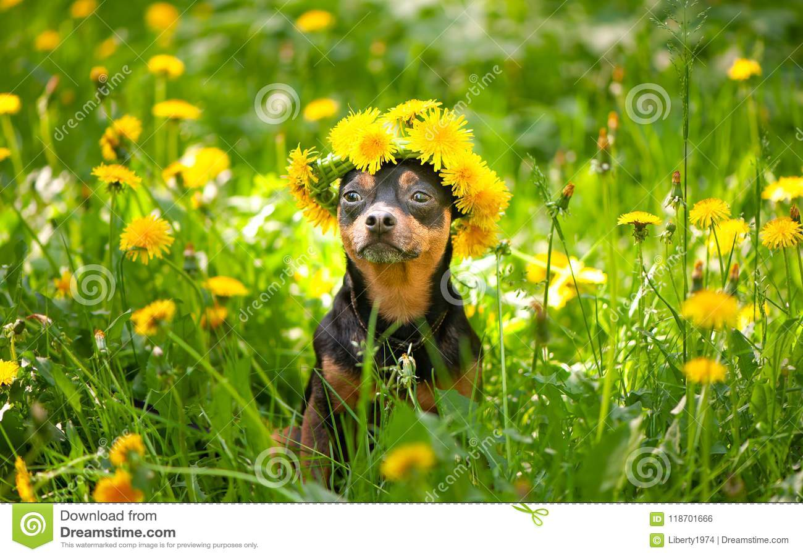 O cachorrinho do ute do ¡ de Ð, um cão em uma grinalda da mola floresce em uma florescência