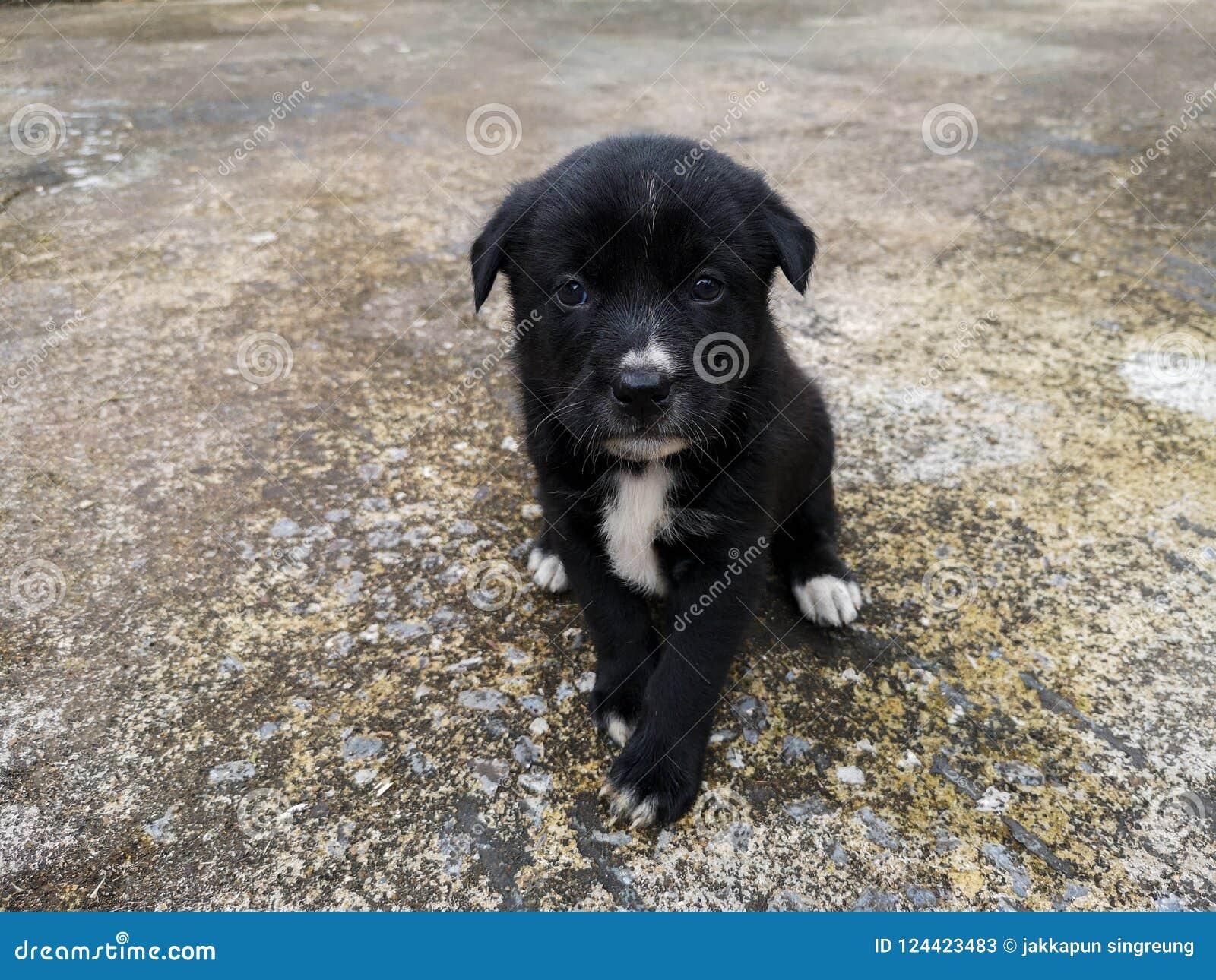 O cachorrinho preto senta o proprietário de espera