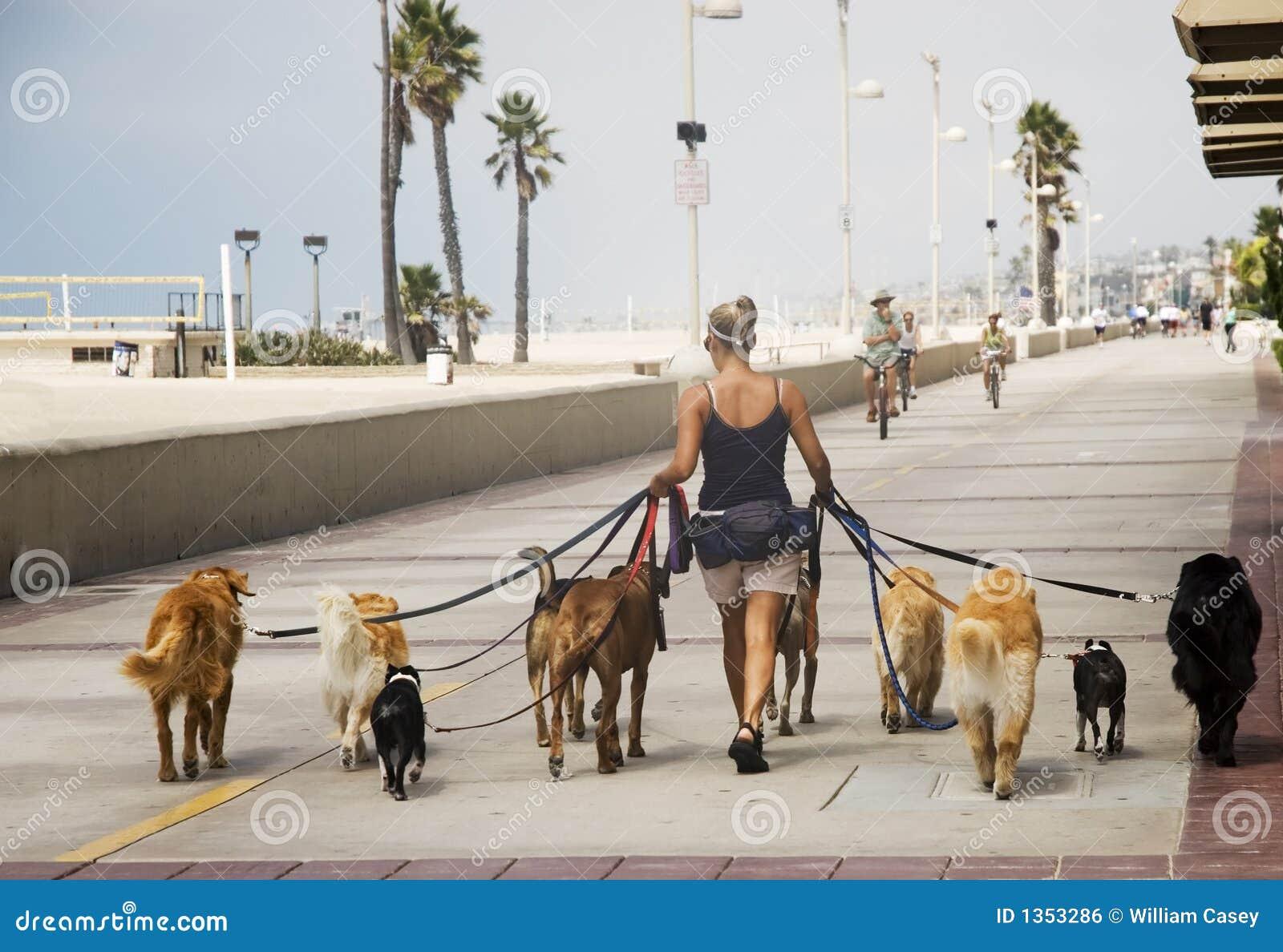 O caminhante do cão