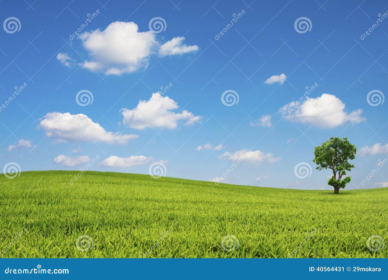 O campo e a árvore verdes com céu azul nublam-se