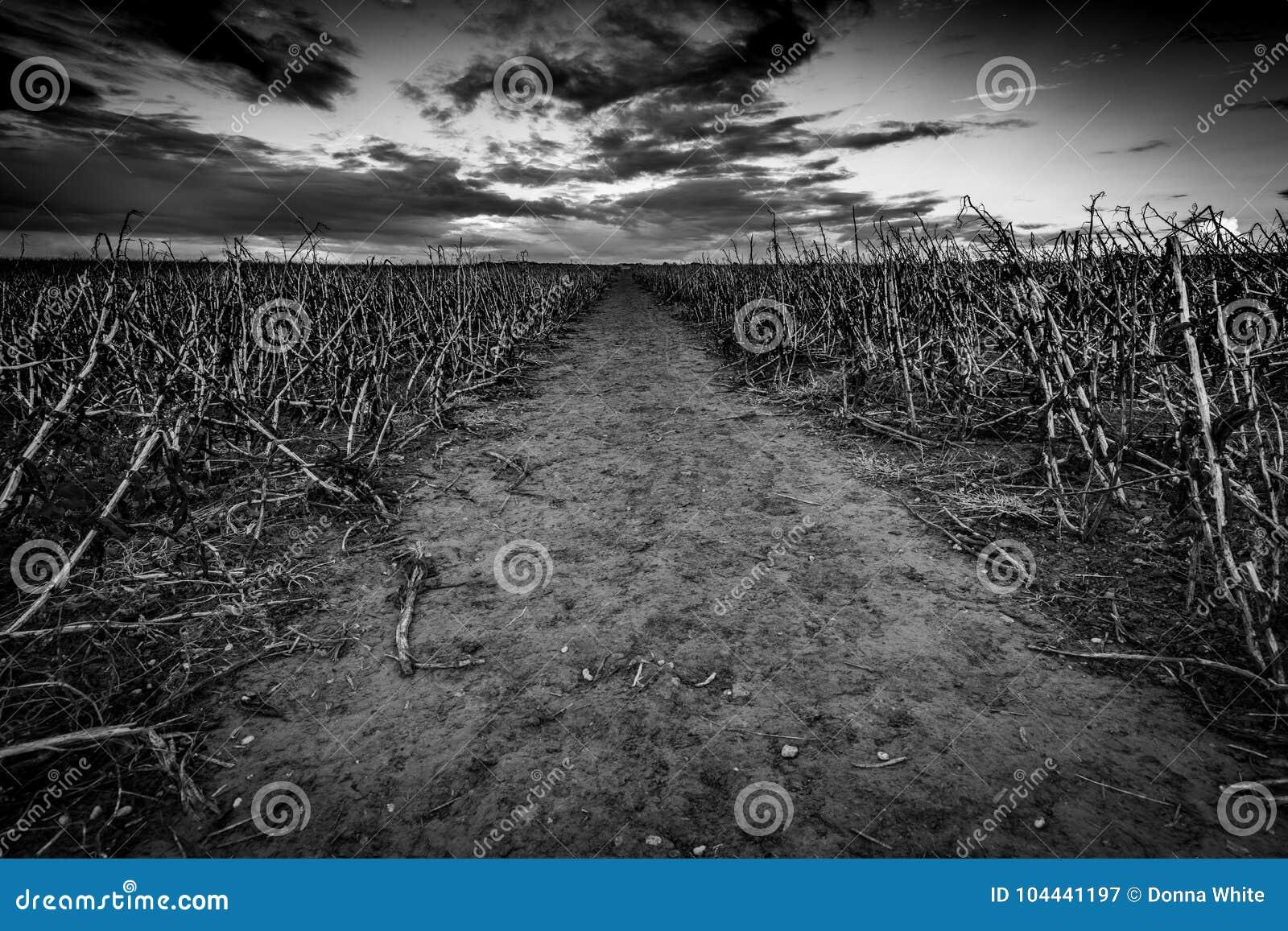 O campo inoperante