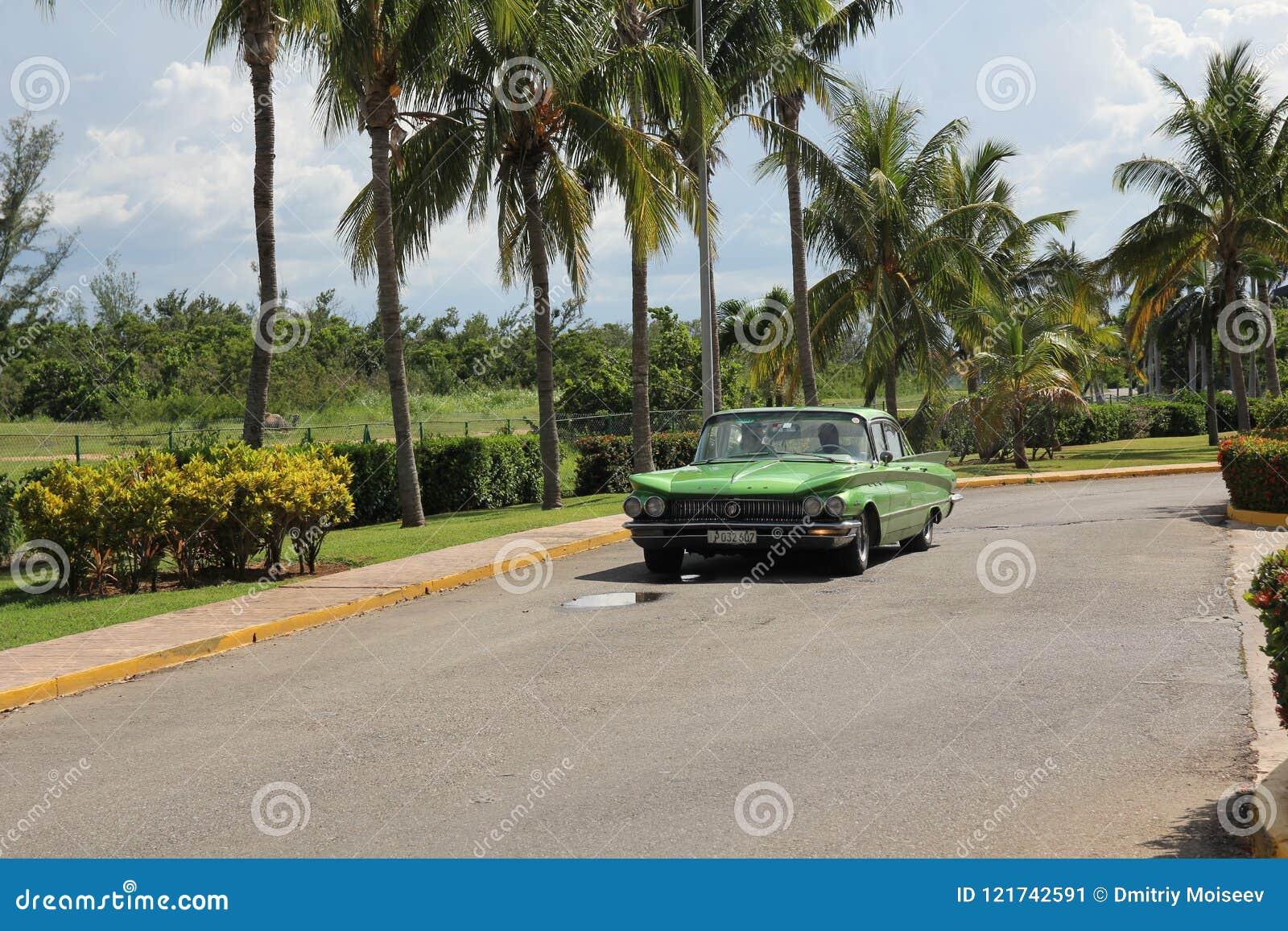 O carro americano do vintage verde monta ao longo de uma fileira de palmeiras altas