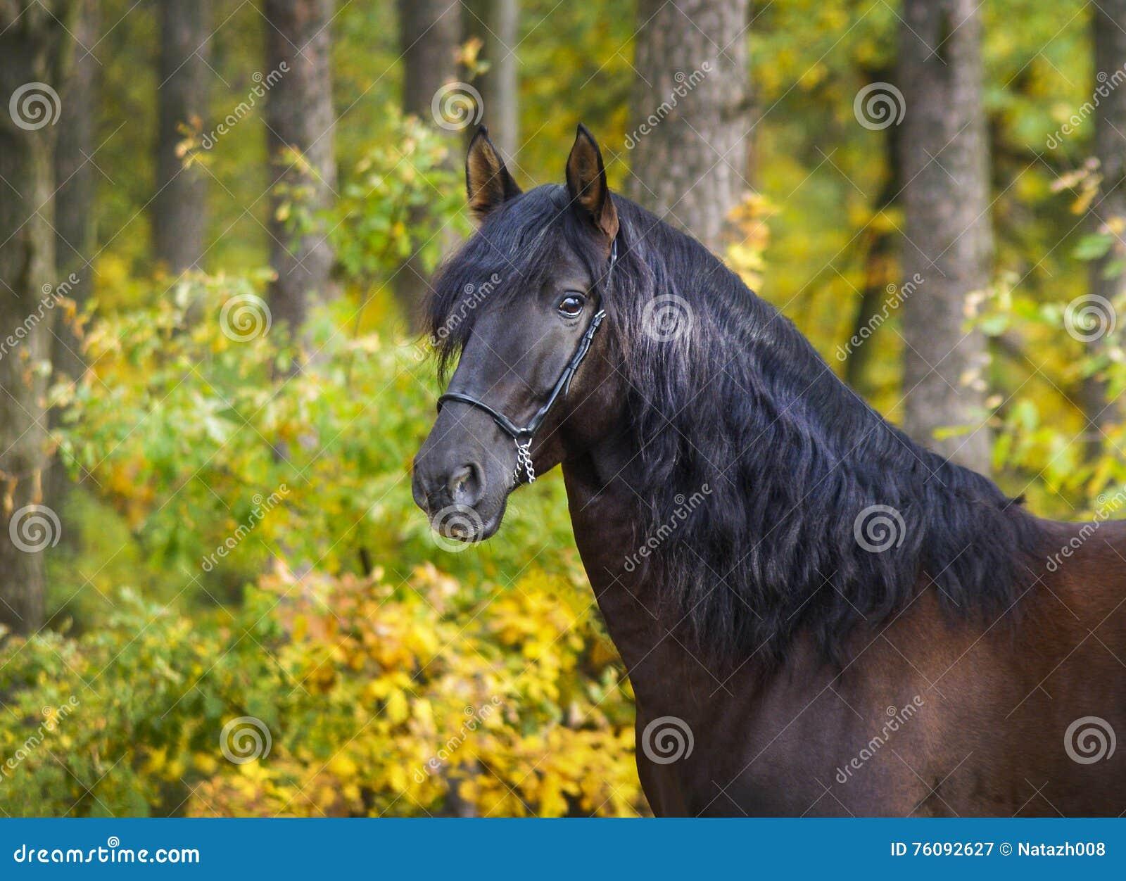 O cavalo com juba longa está estando no fundo da floresta amarela do outono