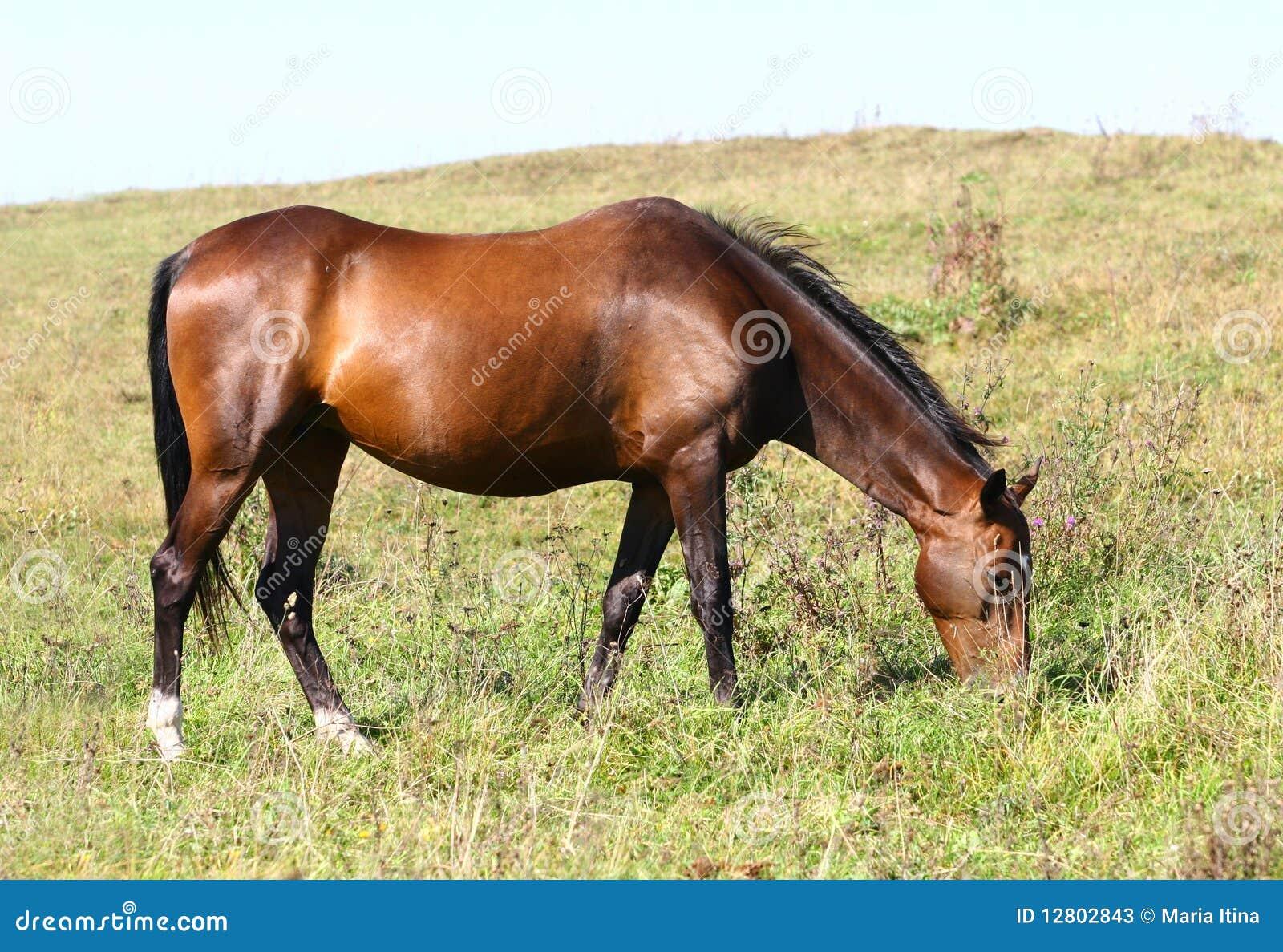 O cavalo pasta