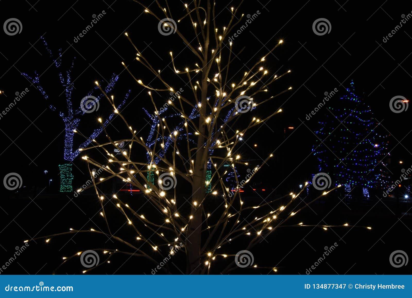 O Christmas Tree: Lights at John Dam Plaza brighten holidays