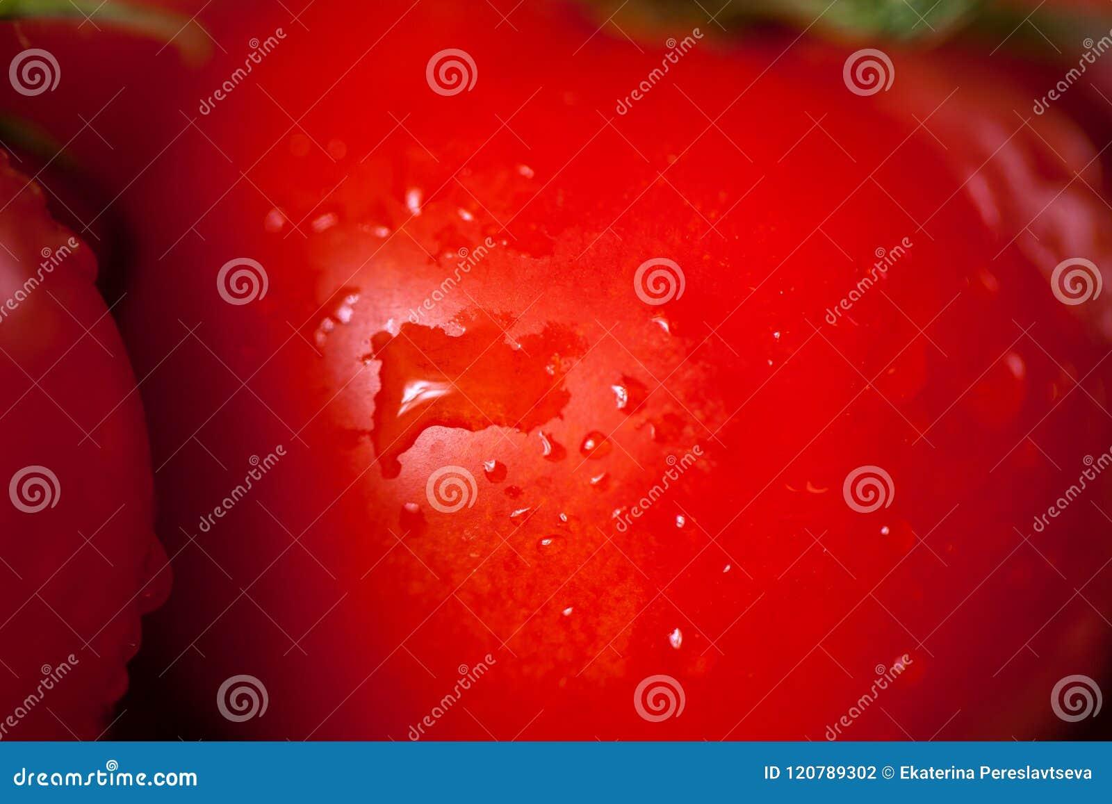 O close-up vegetal do tomate vermelho bonito com água deixa cair