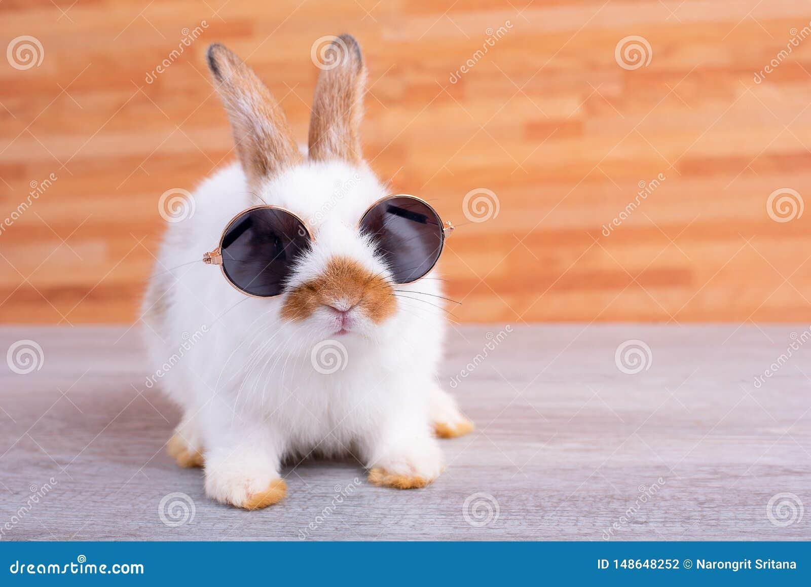 O coelho de coelho adorável pequeno com vidros de sol fica na tabela cinzenta com teste padrão de madeira marrom como o fundo