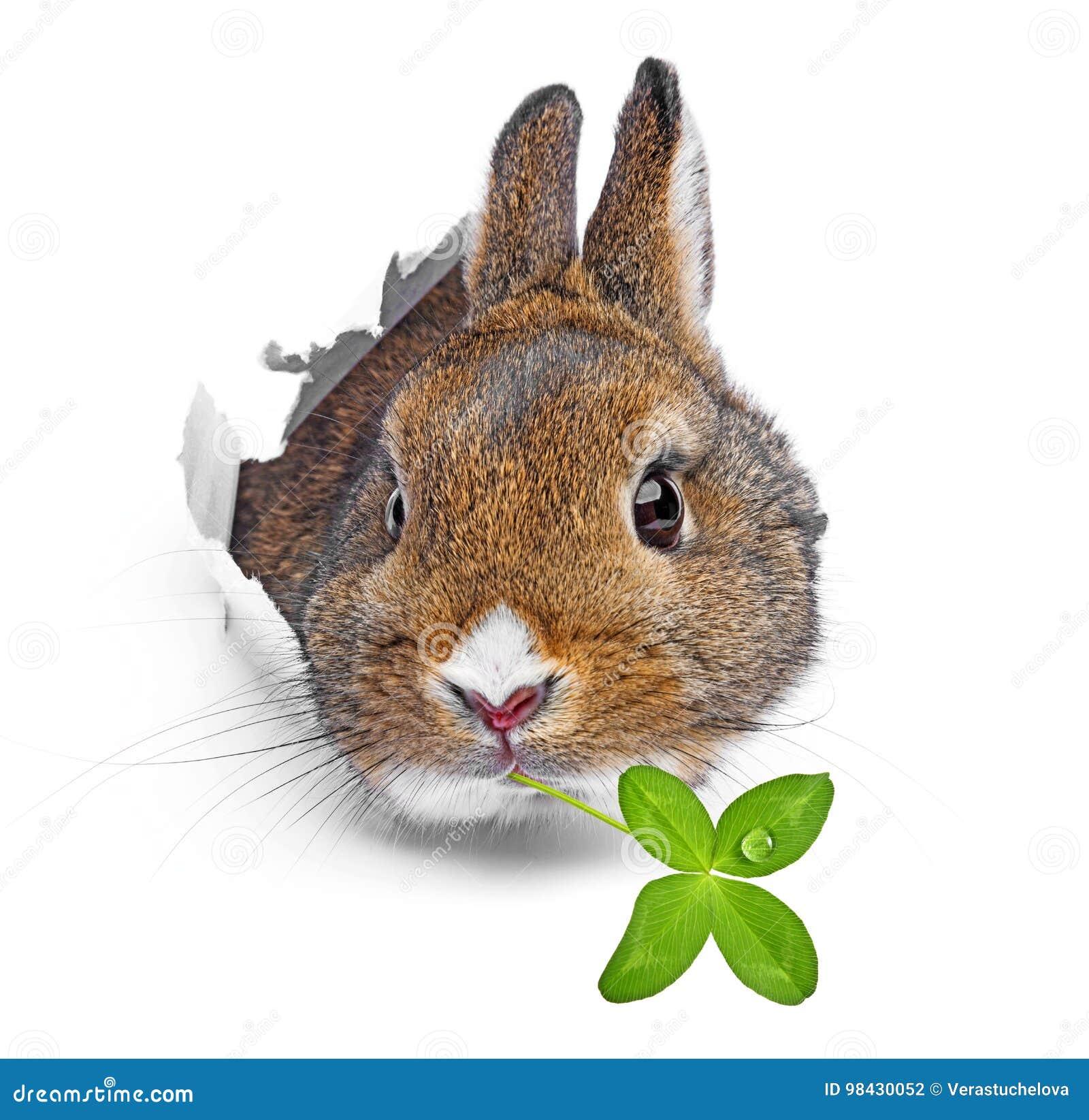 O coelho olha através de um furo em um papel