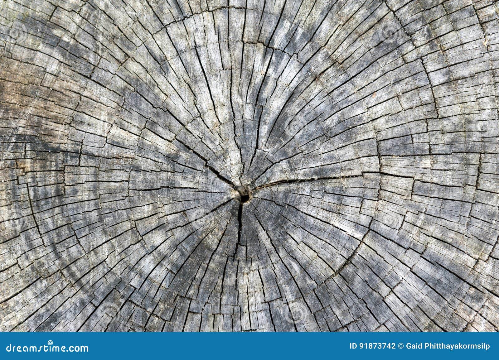 O corte do seção transversal do coto de árvore com anéis anuais e o fragmento texture o fundo