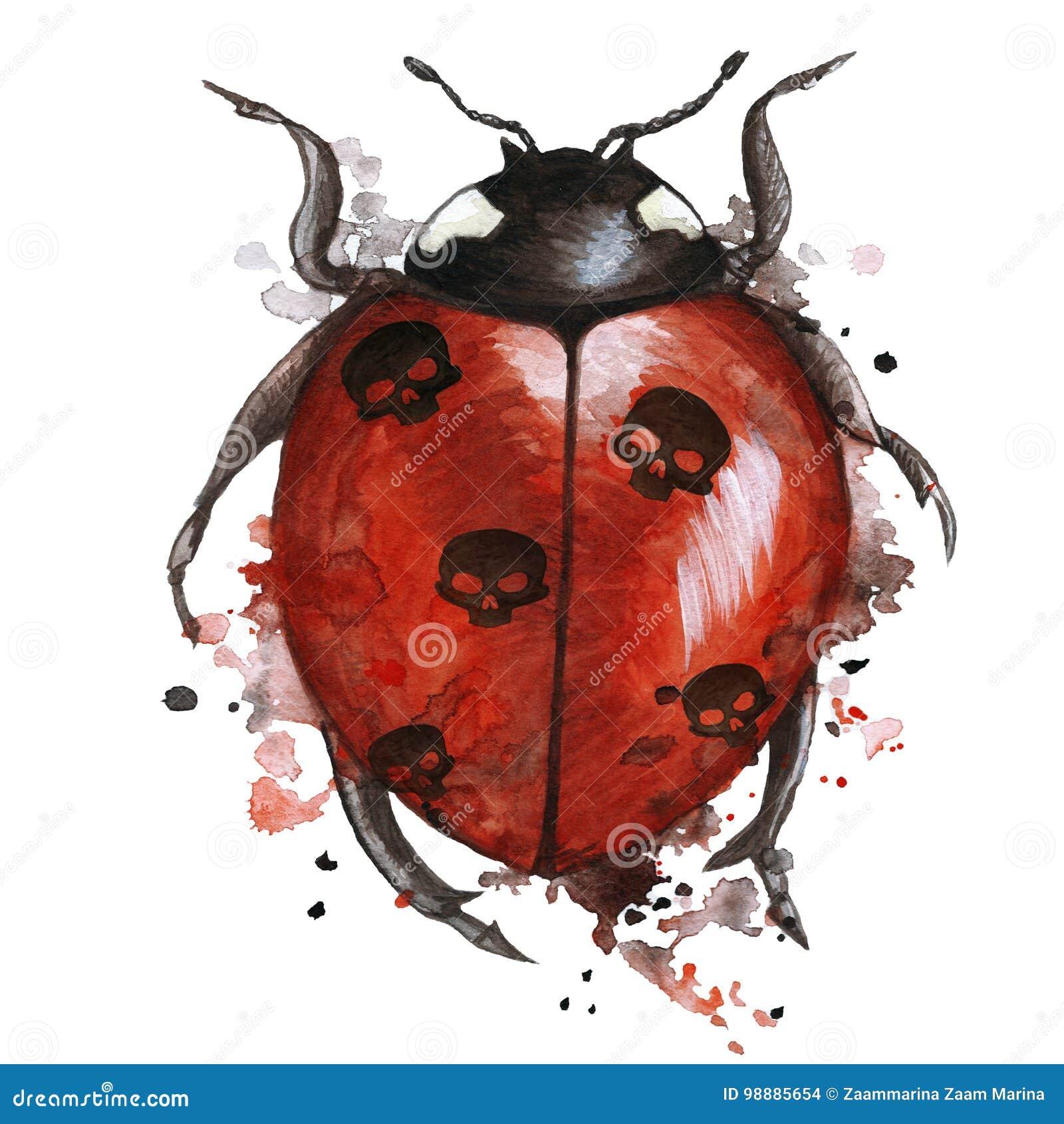 800d4fcad5 O desenho da aquarela de uma joaninha do inseto em um tema do heluin com os