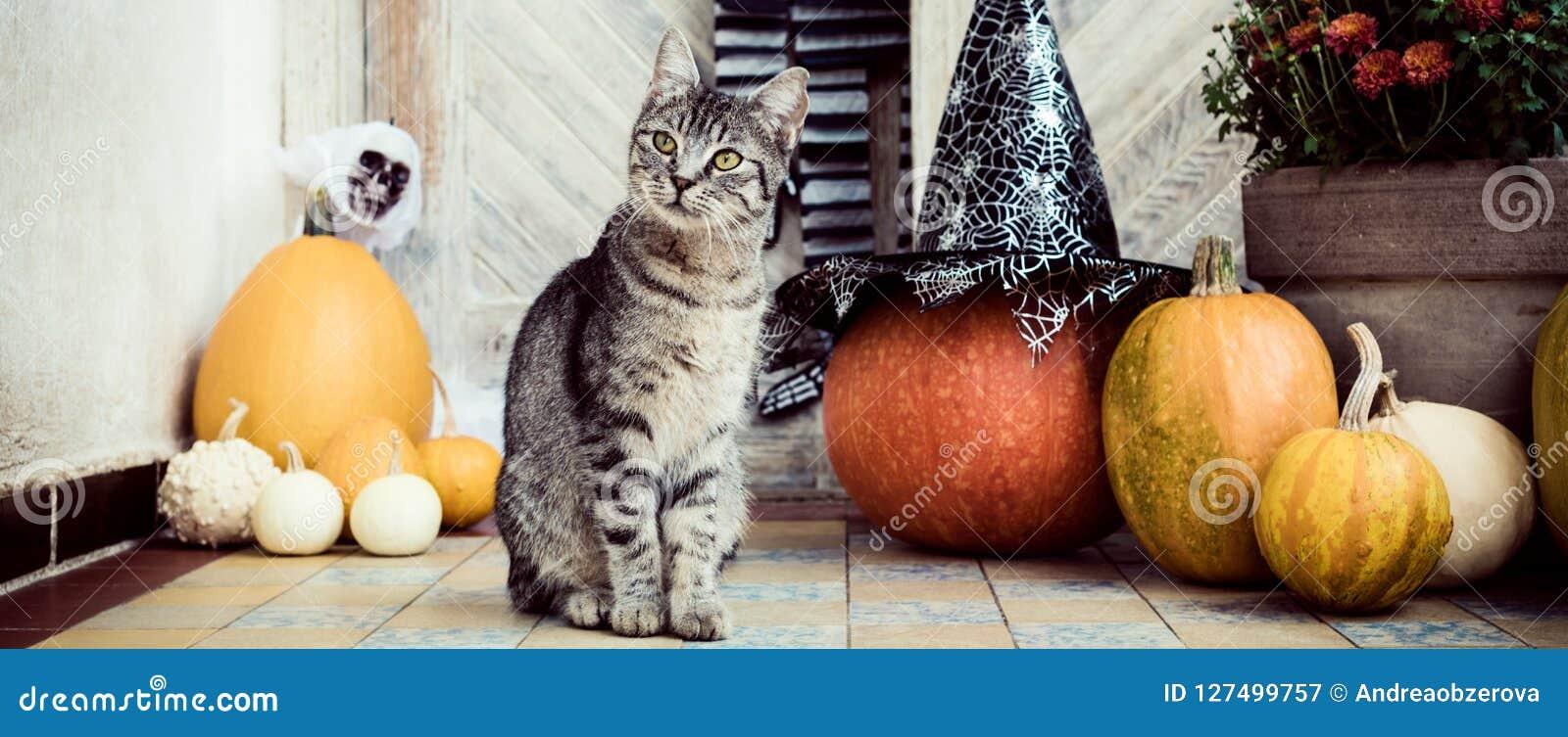 O Dia das Bruxas decorou a porta da rua com as várias abóboras do tamanho e da forma O gato em Front Porch decorou para a bandeir