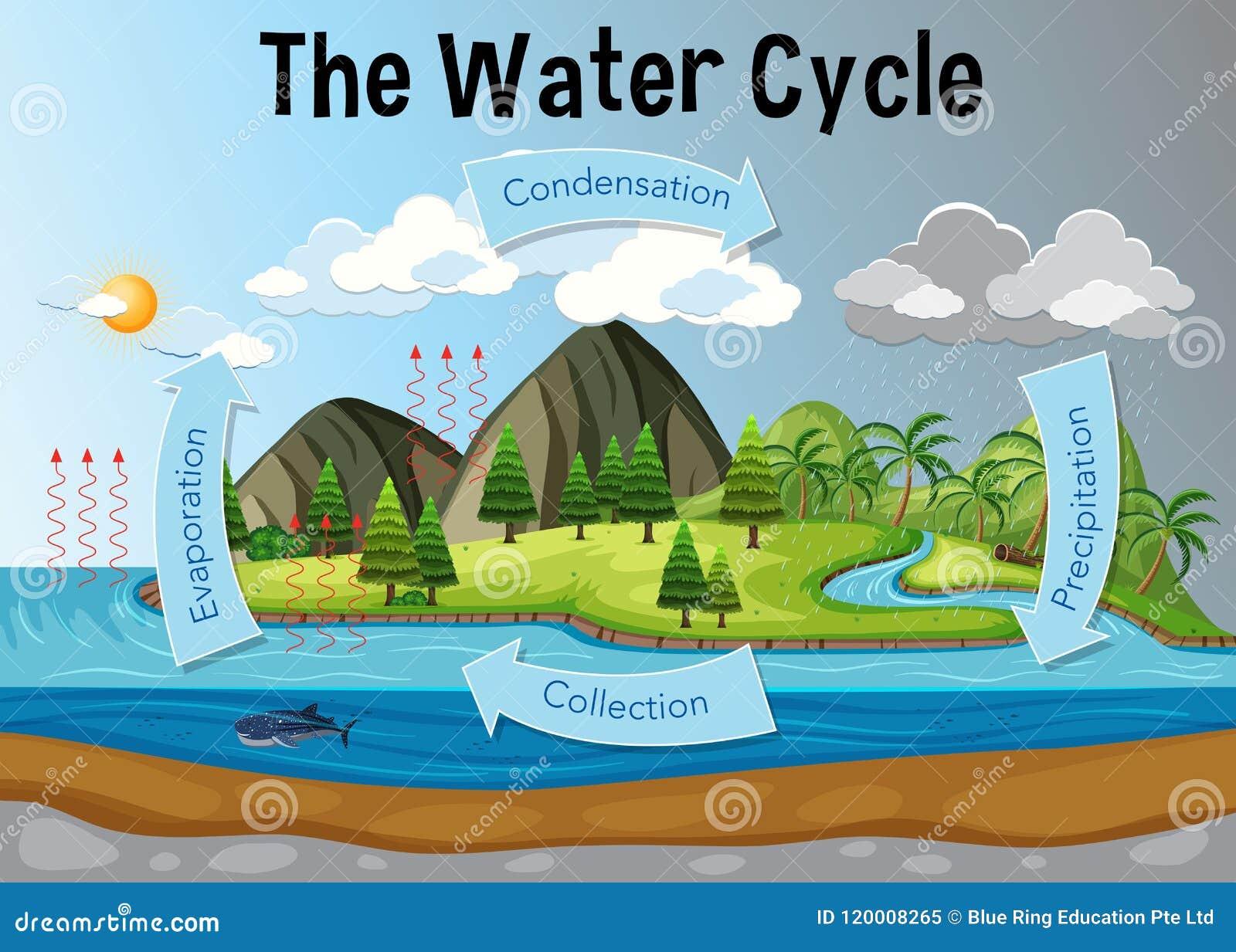 O diagrama do ciclo da água