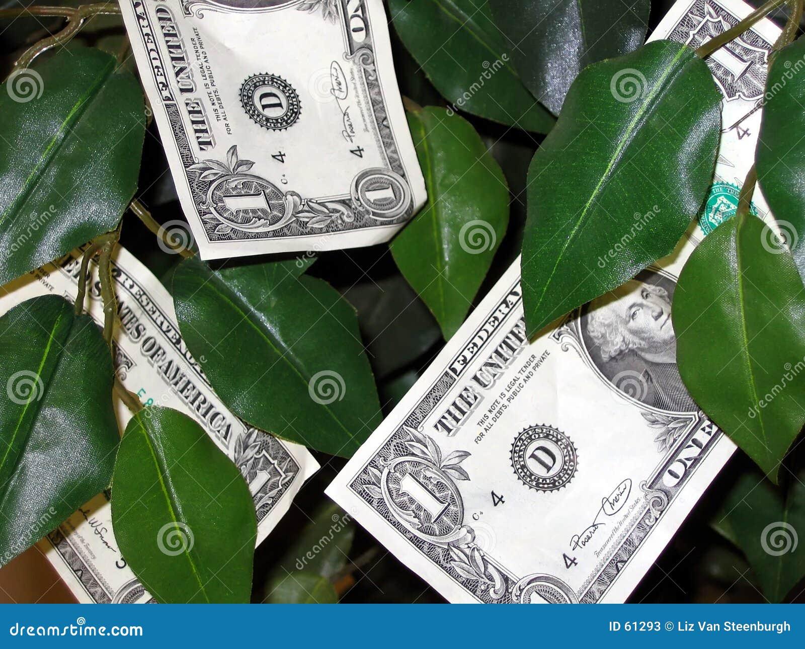 O dinheiro cresce em árvores!