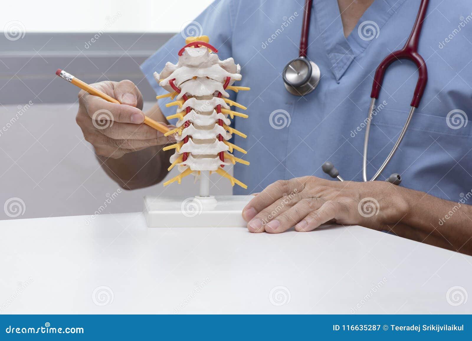 O doutor demonstra o modelo cervical da espinha
