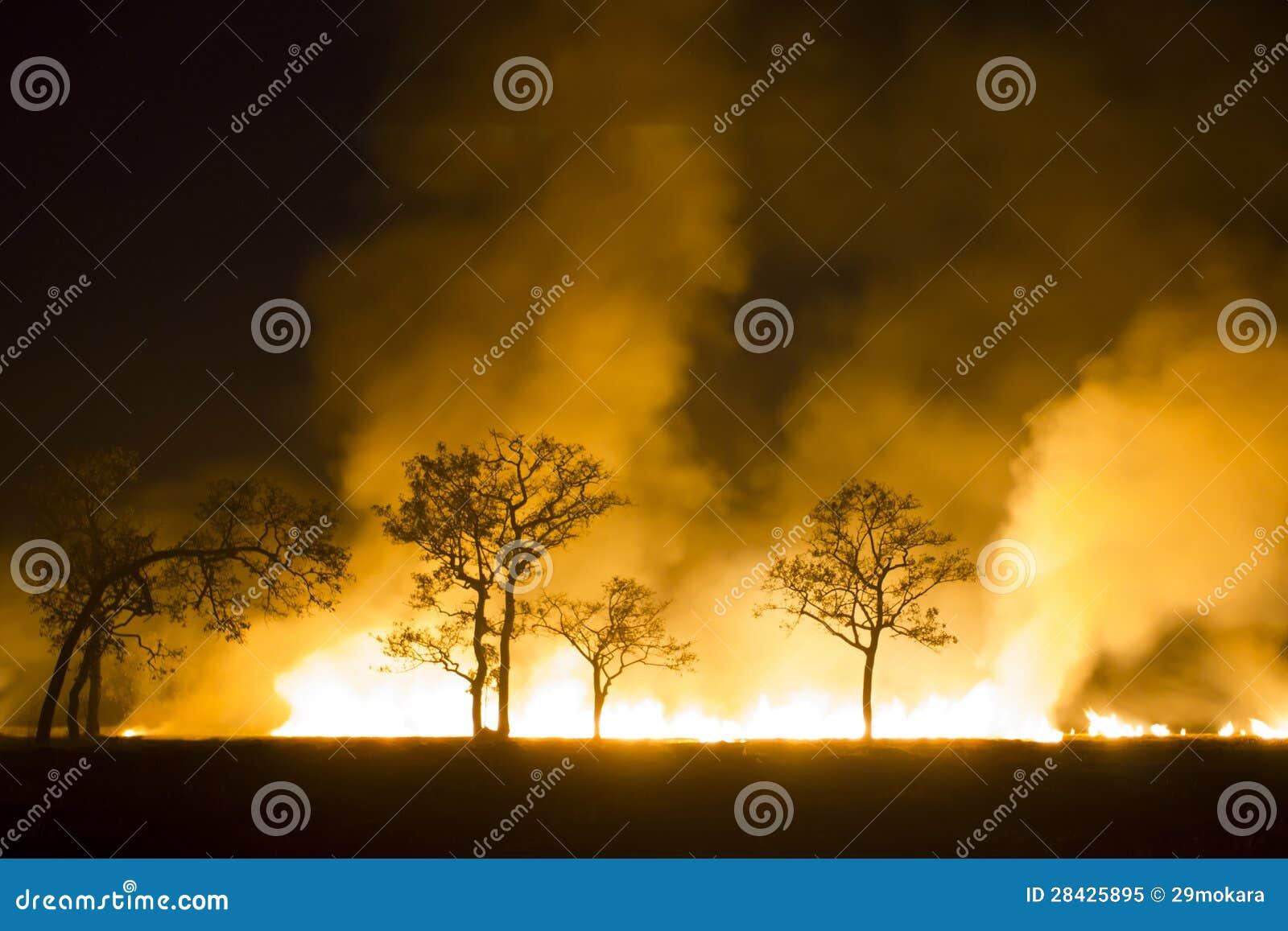 O ecossistema ardente da floresta do incêndio violento é destruído